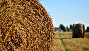 Husk arbejdsskadeforsikringen hvis du er landmand