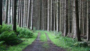 reglerne for færdsel i privatejet skov