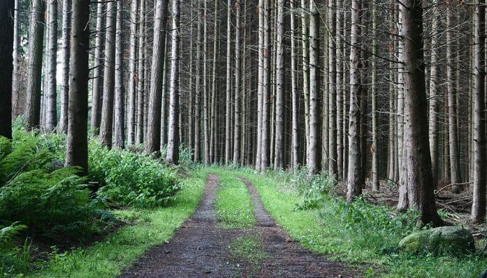 Hvem må færdes i privatejede skove og hvornår?